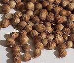 семена (плоды) кориандра (киндзы)